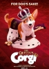Photo  de Royal Corgi