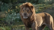 Photo  de Le Roi Lion